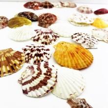 Deniz Kabuğu Karışık Paket
