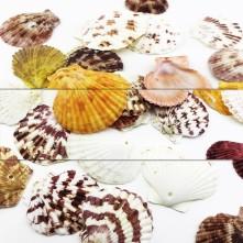 Deniz Kabuğu 5 Adetli Karışık Paket