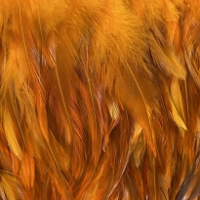 Horoz Tüyü Turuncu