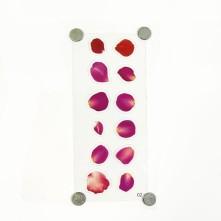 Reçine Epoksi Sticker - Kırmızı Yaprak