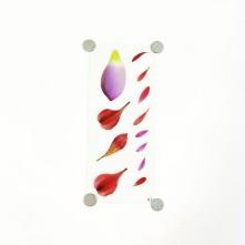 Kuru Çiçek Reçine Epoksi Sticker
