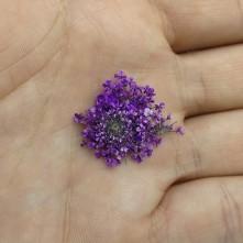 Sultan Otu - Kurutulmuş Çiçek - Mor