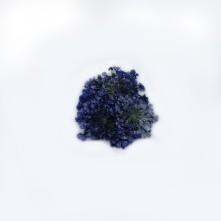Sultan Otu - Kurutulmuş Çiçek - Mavi - 10 adet