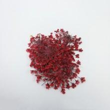 Sultan Otu - Kurutulmuş Çiçek - Kırmızı - 10 adet