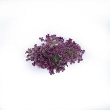 Sultan Otu - Kurutulmuş Çiçek - Açık Mor - 10 adet