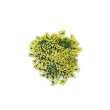 Sultan Otu - Kurutulmuş Çiçek - Sarı - 10 adet