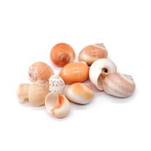 Deniz Kabuğu - Salyangoz - 500 gr